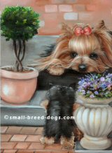 yorkie cards, yorkie painting, Yorkie, Yorkshire Terrier, art