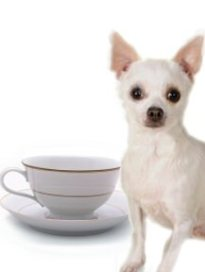 Teacups are not for Chihuahuas and labeling them as such only perpetuates the stigma that larger chihuahuas are inferior. Read our