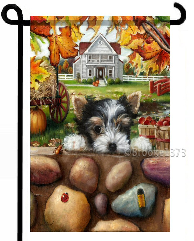 Parti Yorkie puppy peaks over stone wall autumn leaves and farm house yard art