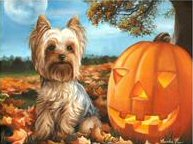 Yorkie, halloween, painting, dog, pumpkin, art