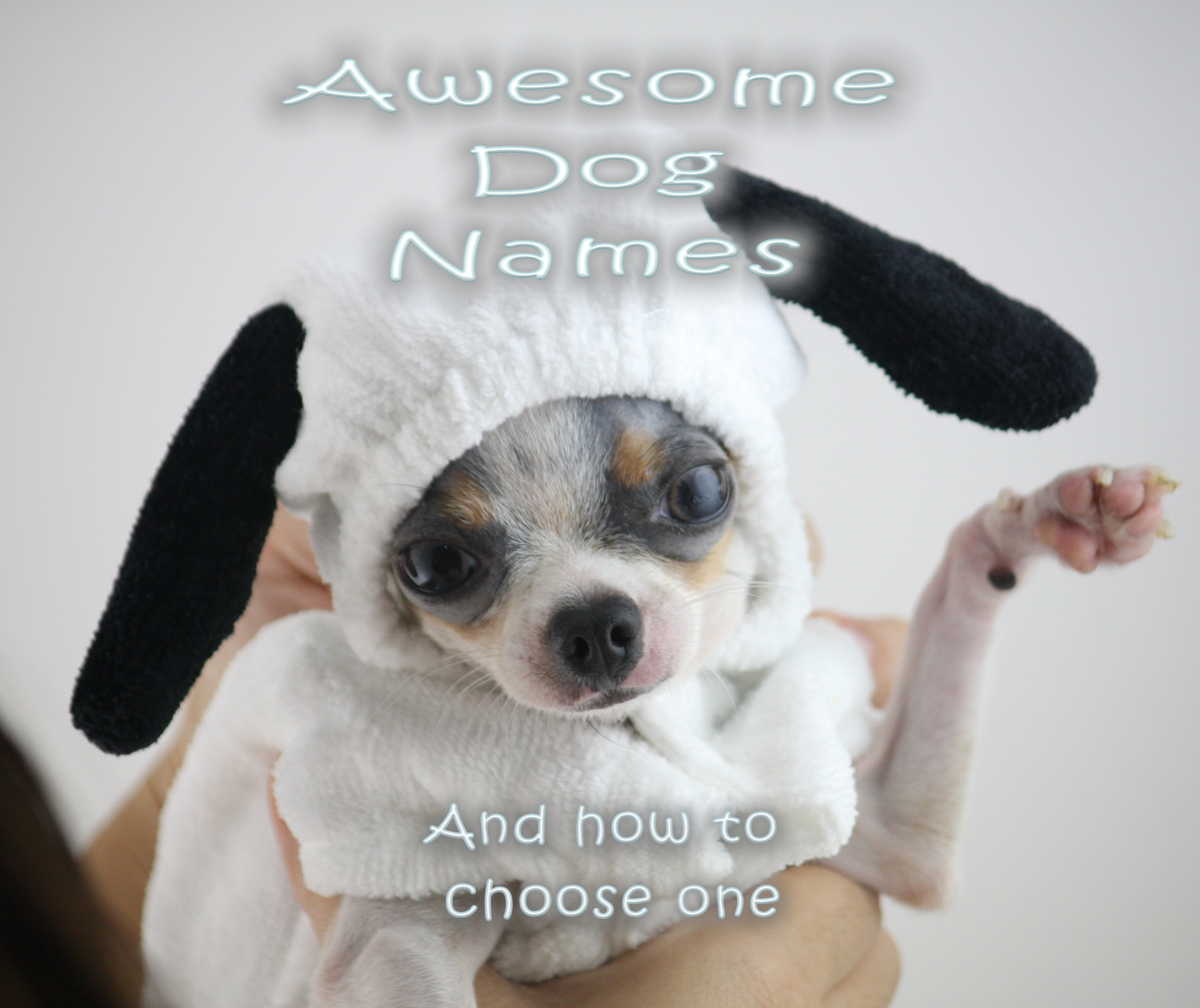 male dog names with chihuahua in snoopy costume