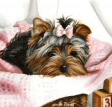Yorkshire Terrier, Yorkie Puppy, Painting, Pink Gingham Puppy
