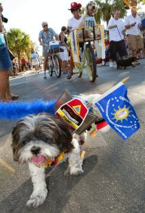 top right corner of pic, we made the front page of the key west citizen in the pet stroll!!