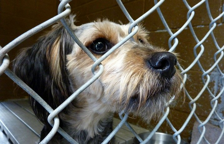 sad dog, dog in cage, spay and neuter, shelter dog