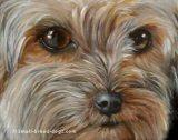 Yorkie face, Yorkie eyes, note cards, fine art prints, Yorkshire Terrier paintings