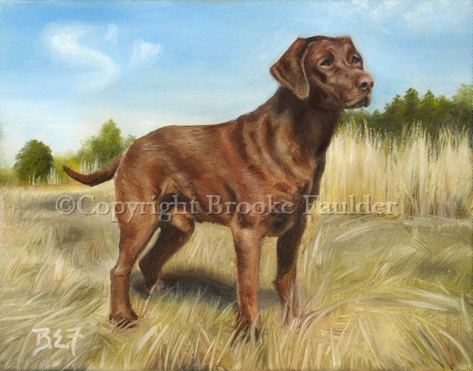 Bo is a chocolate lab dog painted on commission as a gift for a family member. Contact me if you'd like to see a painting made of your dog. All I need are clear pictures of your dog/s to turn them into a work of art for your walls.