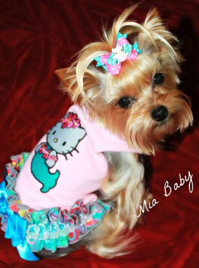 Cute mermaid dog dress! The little Yorkie model looks up as though she's proud to show off the ruffled hello kitty outfit, hand made with care by animal lover and seamstress Irene Kerley.