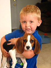 little boy holding beagle puppy. Photo by pixydust8605