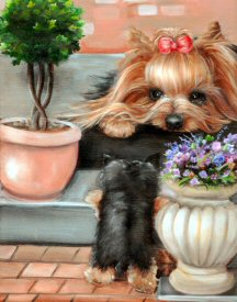 Yorkshire Terrier, Yorkie puppy, steps, help me up