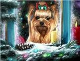 Yorkie face, Yorkie eyes, note cards, fine art prints, Yorkshire Terrier painting
